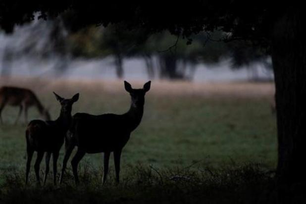 Lockdown lijkt goed nieuws voor wilde dieren: pak minder aanrijdingen geteld
