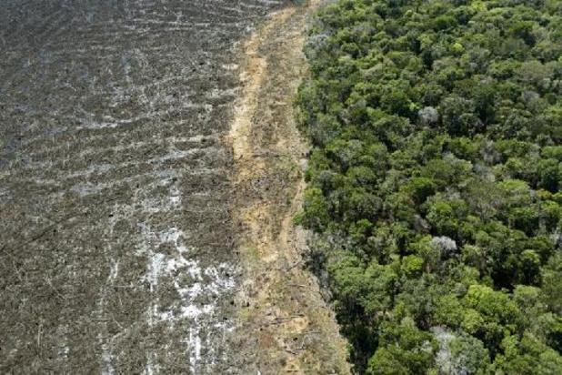 Déforestation record en Amazonie en avril