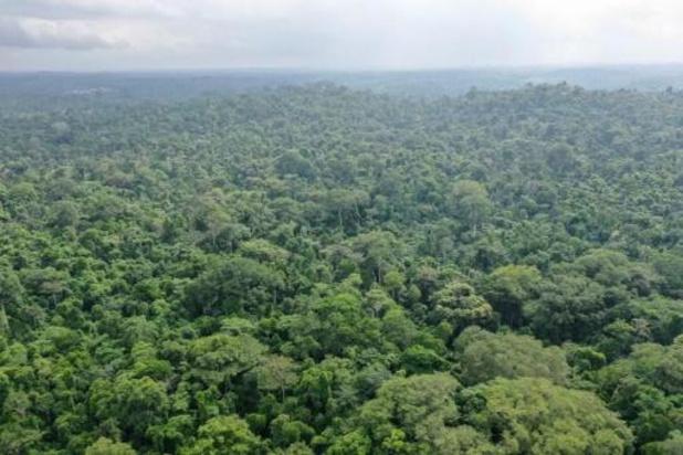 Près d'un tiers de la flore tropicale africaine menacée d'extinction