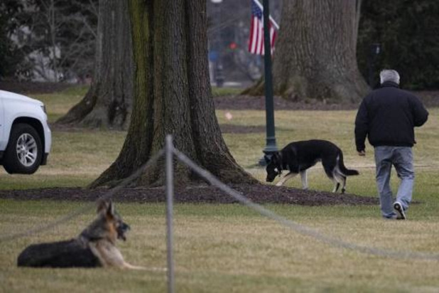 Honden van Joe Biden keren snel weer terug naar Witte Huis na incident