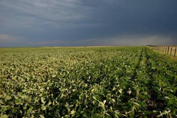 La Commission autorise la mise sur le marché d'un soja OGM de Monsanto