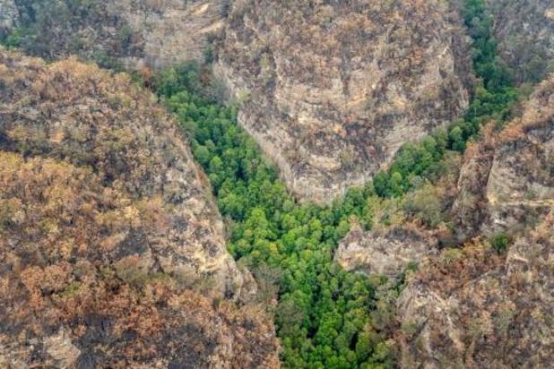 Prehistorische bomen in het geheim gered