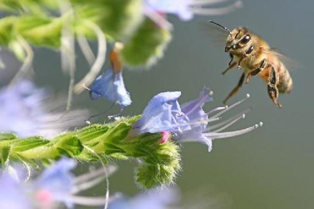 Gemeenten hebben oog voor bijenvriendelijk wegbermbeheer