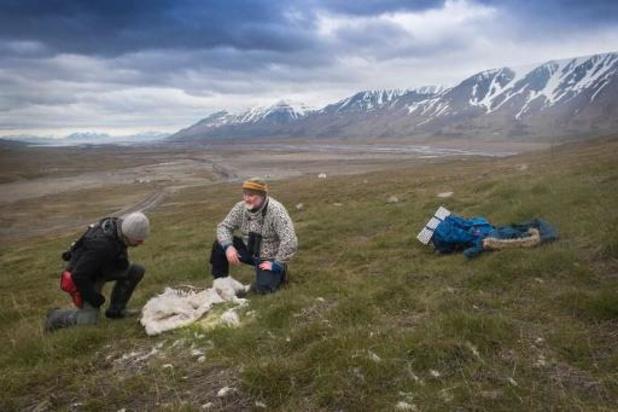 Arctique: un homme tué par un ours polaire au Svalbard
