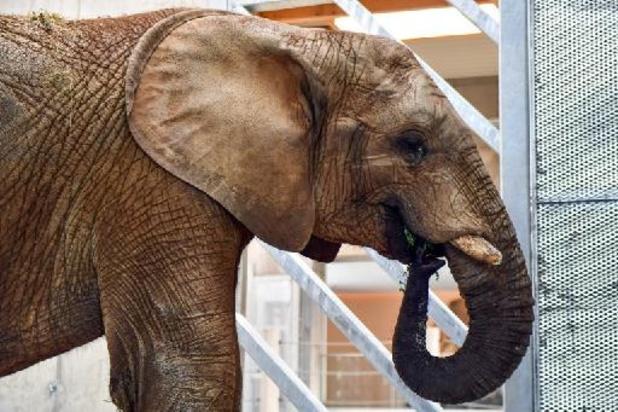 China zet vrachtwagens in tegen oprukkende olifanten bij miljoenenstad