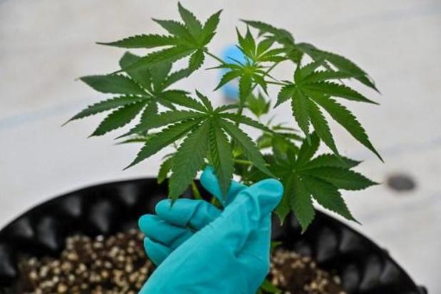 Medicinaal cannabisbedrijf ontvangt Vlaamse staatssteun