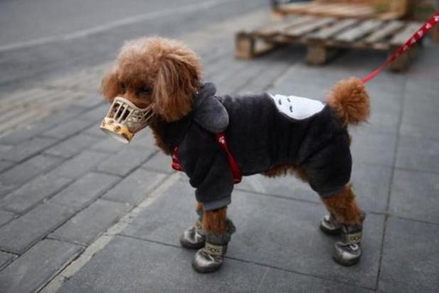 Un premier chien infecté par le coronavirus confirmé à Hong Kong