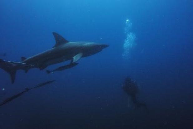 Mysterieuze gebeurtenis decimeerde haaienpopulaties met 90 procent