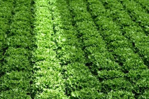 Phytofar opposé à la réduction de 50% de l'utilisation des pesticides chimiques d'ici 2030