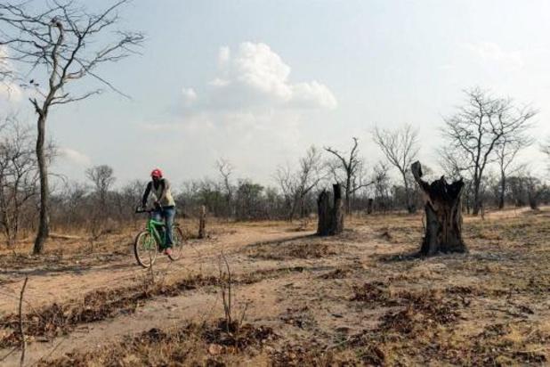 'Duurzame landbouw moet prioriteit worden van ontwikkelingssamenwerking'