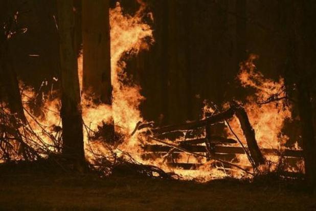 Bosbranden Australië - Australië zet zich schrap voor hitte en sterke wind