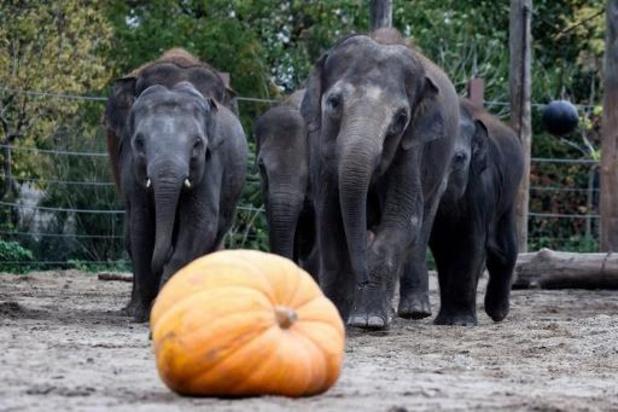 Le parc animalier Pairi Daiza ne rouvrira pas avant au moins le 14 décembre