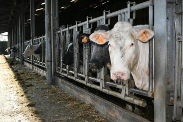 Les émissions de l'élevage en Europe pires que les voitures pour le climat