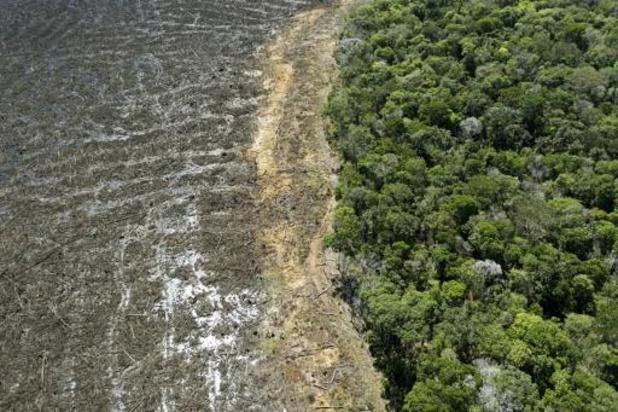 Amazone: voor het eerst sneuvelt meer dan 1000 vierkante kilometer regenwoud in een maand