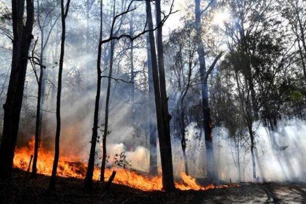"""""""Bosbranden Australië kunnen uitsterven van koalapopulatie versnellen"""""""