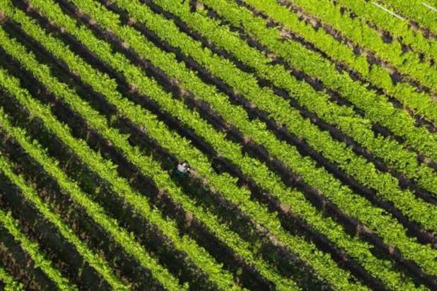 Le Danemark accélère la réduction des émissions d'azote de l'agriculture
