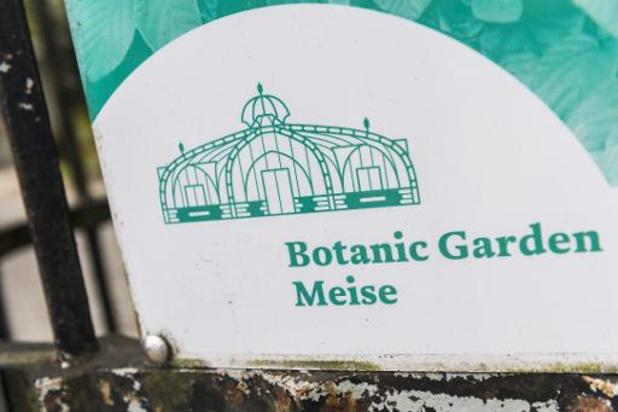 Weyts se fâche sur le Jardin botanique de Meise qui a fait abattre des chevreuils