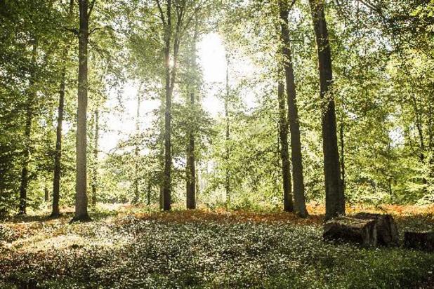 Herbebossing in Europa kan voor meer regen zorgen
