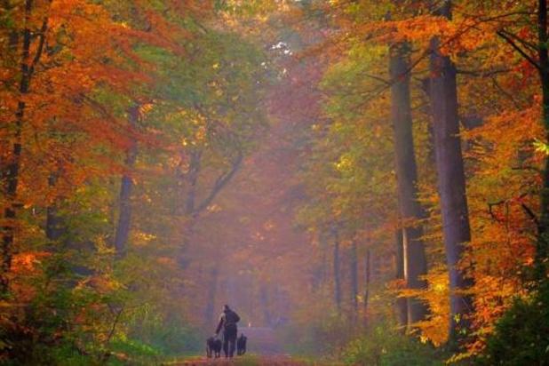 Europese bossen zouden dubbel zoveel CO2 kunnen absorberen