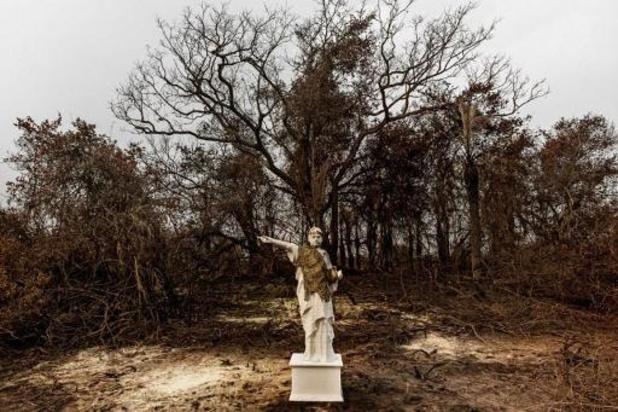 Plus d'un million de citoyens exigent une loi européenne contre la déforestation importée