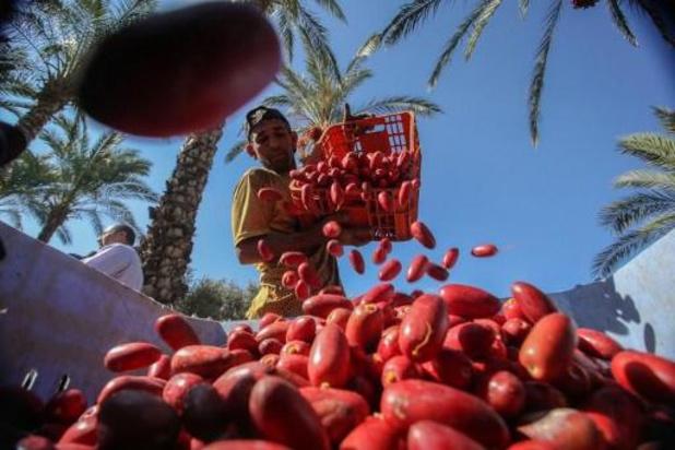 Oxfam vraagt België om actie tegen exportverbod voor Palestijnse landbouwproducten