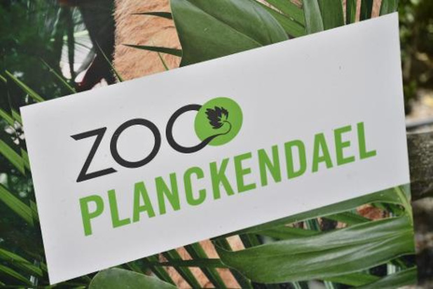 Zoo Antwerpen en Planckendael maandag open voor abonnees, op 1 juni voor grote publiek