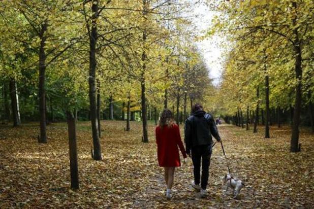 Boswachters zullen harder optreden tegen loslopende honden: boetes van 80 euro of meer