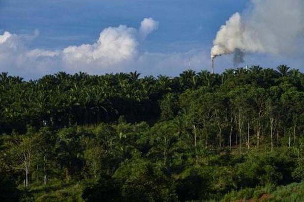 Huile de palme: l'Indonésie porte plainte contre l'UE devant l'OMC
