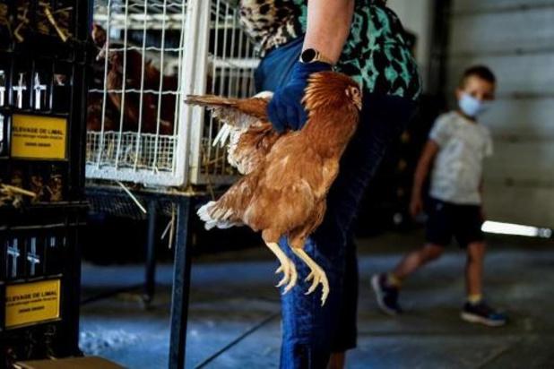 Vogelgriep bij pluimveebedrijf in Friesland