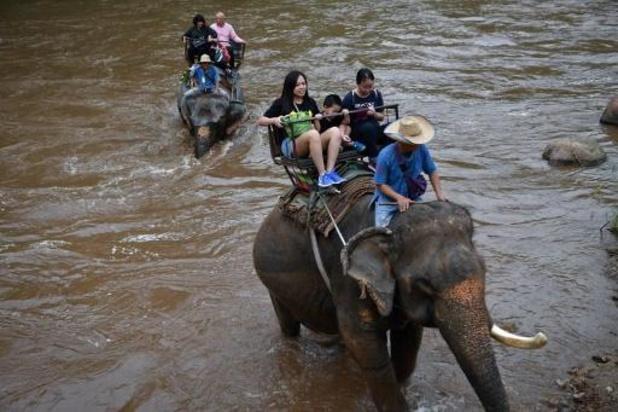 Une éléphante de 59 ans décède après une vie à transporter des touristes au Vietnam