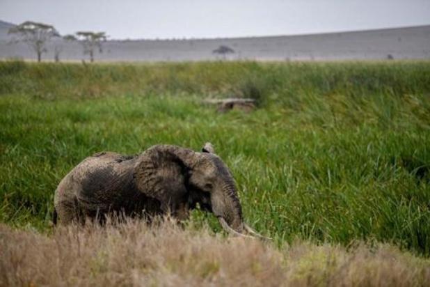 Meer olifanten en giraffen geteld in Kenia
