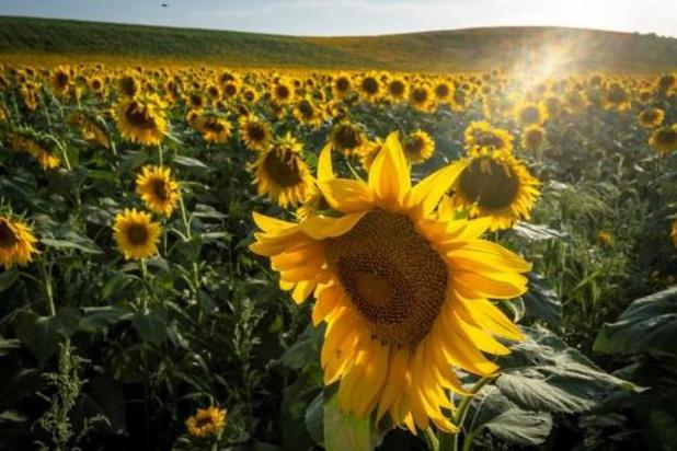 Un soleil généreux s'installe pour les prochains jours