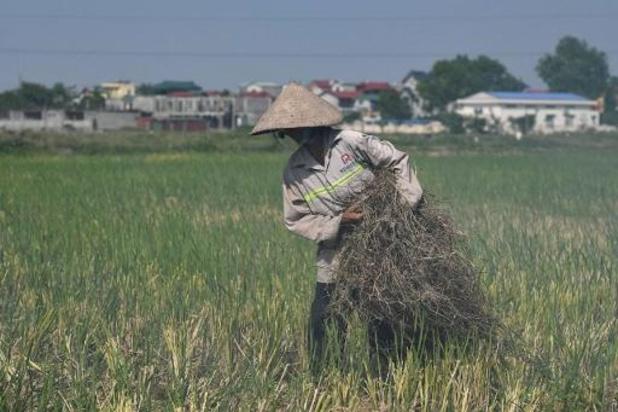 Vietnamese Nationale Vergadering zet licht op groen voor handelsakkoord met de EU