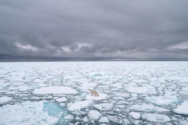 """Réchauffement climatique: """"La banquise fond deux fois plus vite que prévu"""""""
