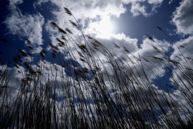 Weerbericht: zon met stapelwolken en plaatselijk hevige buien