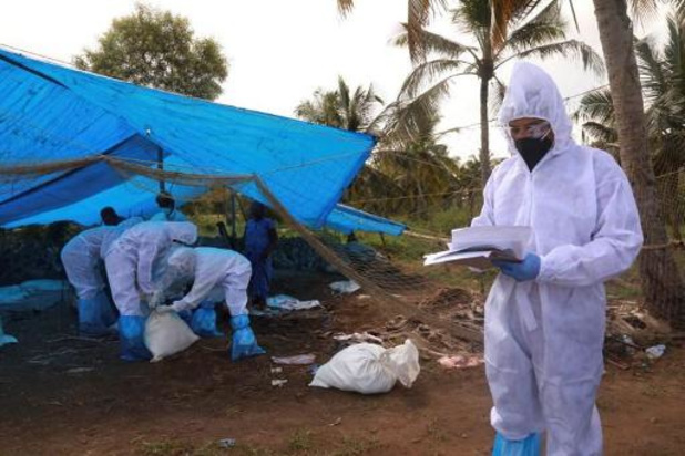 L'Inde combat la grippe aviaire, des milliers d'oiseaux morts dans différents États