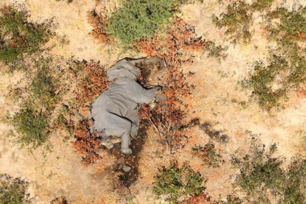 Nog steeds geen oorzaak gevonden voor olifantensterfte Botswana