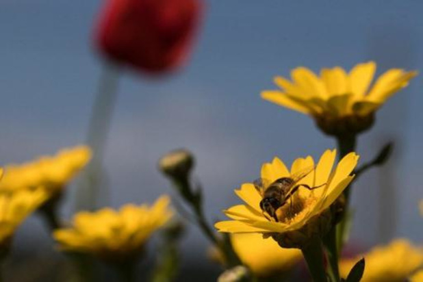 Week van de Bij opent zondag zonder groot bijenfeest