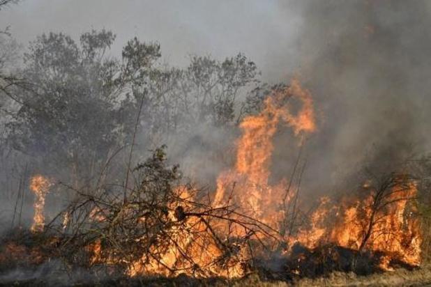 Bosbranden richten ravage aan in Boliviaanse natuurreservaten