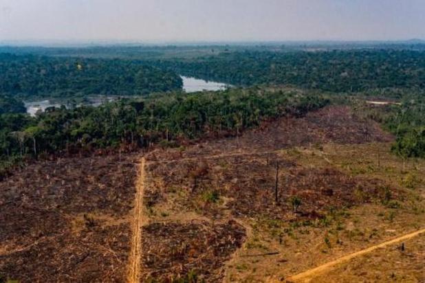 10.000 vierkante kilometer Amazonewoud verdwenen in één jaar tijd