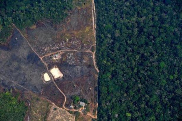 Elke zes seconden verdween in 2019 een voetbalveld aan oerbos