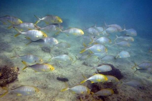 Réchauffement climatique et pollution rendent les poissons vulnérables aux prédateurs