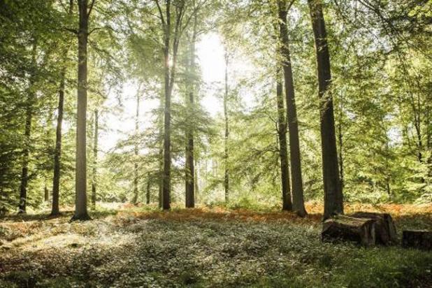 Wereldwijd is één op de drie boomsoorten met uitsterven bedreigd