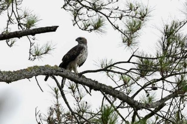 Comptages massifs d'oiseaux ce week-end dans le cadre de l'EuroBirdwatch 21