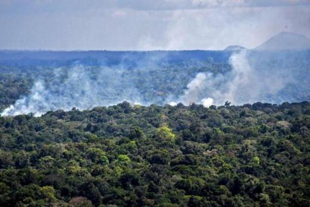 """Weer 8.500 km2 van Amazonewoud gekapt in 2020, experts noemen ontbossing """"zorgwekkend"""""""