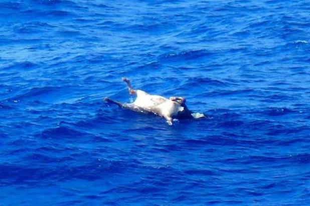 Tweede overlevende uit zee gehaald