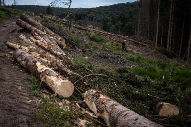 Le WWF plaide pour un centre d'expertise contre le commerce illégal du bois en Belgique