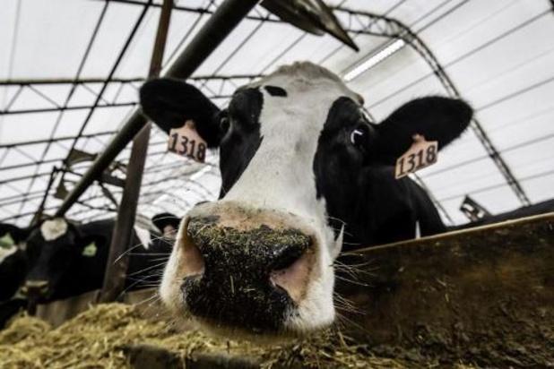Bierresten in veevoeder leidt tot klimaatvriendelijkere melk