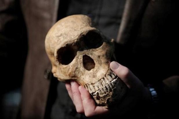 Modern menselijk brein dook 1,7 miljoen jaar geleden voor het eerst op