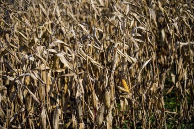 La pénurie alimentaire menace dans les pays dépendant des importations